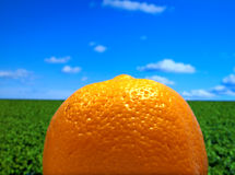 Healthy orange, blue sky and grass Royalty Free Stock Image