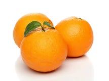 Healthy orange isolated Stock Image