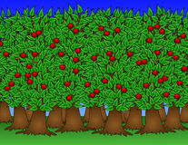 Healthy Orchard Illustration Stock Photo