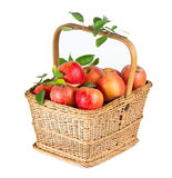 Healthy organic apples in the basket Stock Photos