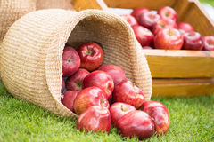 Healthy Organic Apples in the Basket Stock Photo