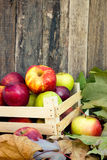 Healthy organic apples Royalty Free Stock Photography