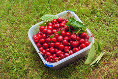 Healthy organic cherries in plastic container Stock Photo