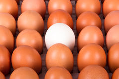 Healthy Organic Eggs Stock Images