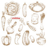 Healthy organic isolated vegetables sketches. Healthy organic cabbage, carrot, pepper, potato, onion, cucumber, zucchini, pea, pattypan, squash leek kohlrabi and Royalty Free Stock Images
