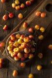 Healthy Organic Rainier Cherries. In a Bowl Royalty Free Stock Photo