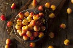 Healthy Organic Rainier Cherries Stock Images