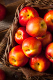 Healthy Organic Raw Ripe Nectarines Royalty Free Stock Image