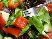 Healthy Organic Salad Royalty Free Stock Images