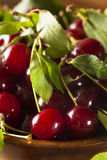 Healthy Organic Sour Cherries Royalty Free Stock Photo