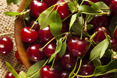 Healthy Organic Sour Cherries Stock Photos