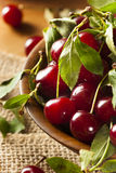 Healthy Organic Sour Cherries Stock Image