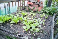 Healthy organic vegetable farming at home small garden Stock Photos