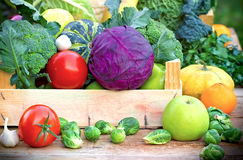 Healthy organic vegetables Royalty Free Stock Photo