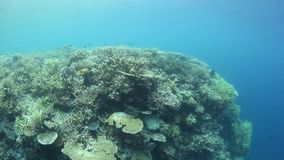 Healthy Pacific Coral Reef stock footage
