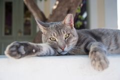 Healthy pet - happy owner. Kitten in Patmos, Greece. Shorthair cat relax outdoor. Cute pet with grey coat on natural. Background. Cat with green eyes on fresh stock images