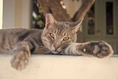 Healthy pet - happy owner. Kitten in Patmos, Greece. Shorthair cat relax outdoor. Cute pet with grey coat on natural. Background. Cat with green eyes on fresh stock photography
