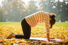 Healthy pregnancy - exercising outdoor Royalty Free Stock Photos