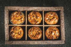 Healthy pumpkin muffins Stock Images