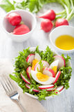 Healthy radish salad with egg and green leaves Stock Photos