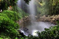 Healthy rainforest in Dorigo Stock Images