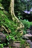 Healthy rainforest in Dorigo Royalty Free Stock Image
