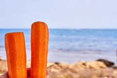 Healthy carrots in the beach royalty free stock images