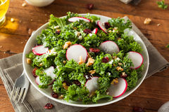 Healthy Raw Kale and Cranberry Salad. With Cheese and Nuts Royalty Free Stock Image