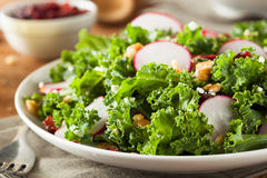 Healthy Raw Kale and Cranberry Salad. With Cheese and Nuts Royalty Free Stock Photos