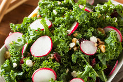 Healthy Raw Kale and Cranberry Salad. With Cheese and Nuts Royalty Free Stock Photo