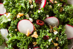 Healthy Raw Kale and Cranberry Salad. With Cheese and Nuts Stock Image