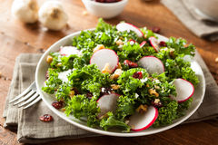 Healthy Raw Kale and Cranberry Salad. With Cheese and Nuts Stock Photography
