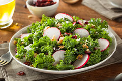 Healthy Raw Kale and Cranberry Salad. With Cheese and Nuts Stock Photos