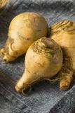 Raw Organic Brown Rutabaga Root stock photo
