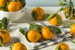 Healthy Raw Organic Satsuma Mandarin Oranges. With Green Leaves Royalty Free Stock Images