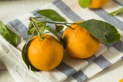 Healthy Raw Organic Satsuma Mandarin Oranges. With Green Leaves Stock Photos