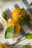 Healthy Raw Organic Satsuma Mandarin Oranges. With Green Leaves Royalty Free Stock Photos