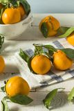 Healthy Raw Organic Satsuma Mandarin Oranges. With Green Leaves Royalty Free Stock Image