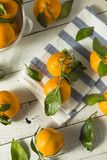 Healthy Raw Organic Satsuma Mandarin Oranges. With Green Leaves Stock Photo