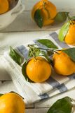 Healthy Raw Organic Satsuma Mandarin Oranges. With Green Leaves Stock Photography