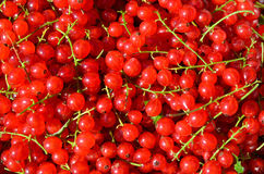 Healthy red currants Royalty Free Stock Image