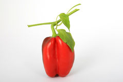 Healthy red pepper food, with stalk. Healthy red pepper food with green leaves, white, closeup, close-up, isolated, macro Royalty Free Stock Images