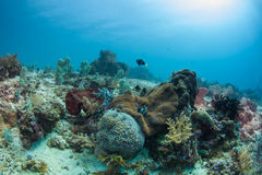 Healthy reef Stock Photography