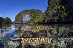 Beautiful Corals and Islands in Raja Ampat royalty free stock photo