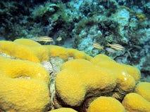 Healthy reef III Royalty Free Stock Photo