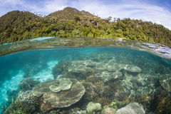 Healthy Reef and Islands in Raja Ampat Stock Image
