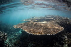 Healthy Reef and Light Royalty Free Stock Images