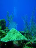 Healthy reef xcalak I Royalty Free Stock Images