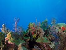 Healthy reefs of Cuba's wonderful Jardin de la Reina Stock Photo