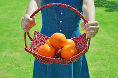 Healthy ripe oranges on a bright sunny lawn. Woman holding a basket of oranges in the grass Stock Image
